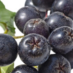Aronia berries – the next superfruit